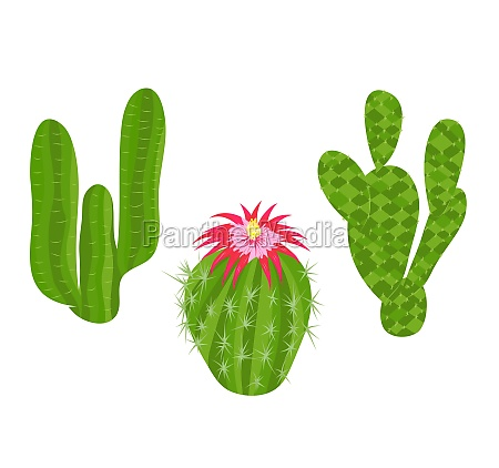 abstract cactuses