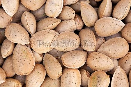 harvesting shelled almonds
