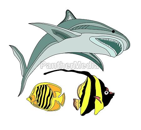 fish of the atlantic ocean vector