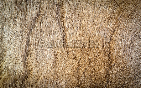 colored reindeer fur texture as background