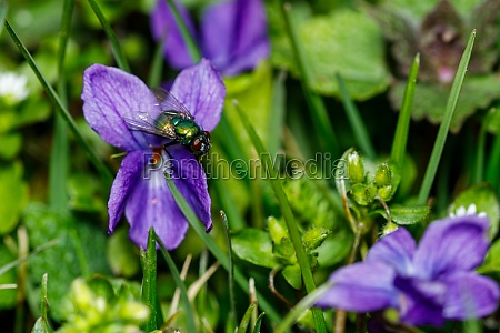 a gold fly on a flower