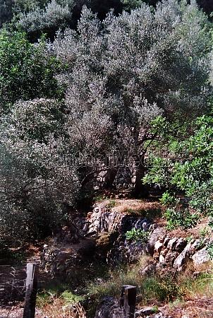 landscape on mallorca