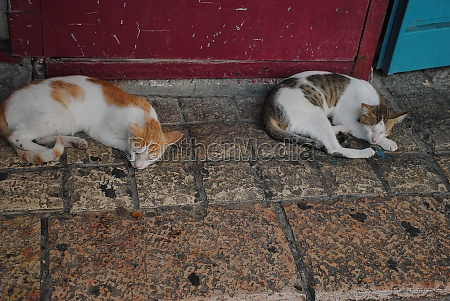 two strolling cats are sleeping on
