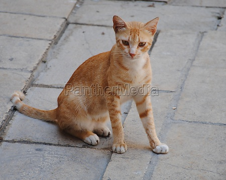 city fauna red strolling cat sitting