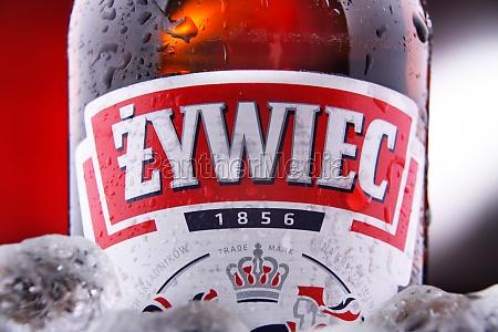 bottle of zywiec beer