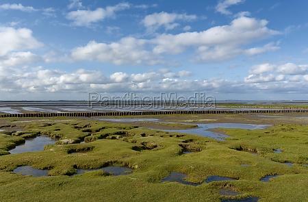 salt marsh north sea north frisia
