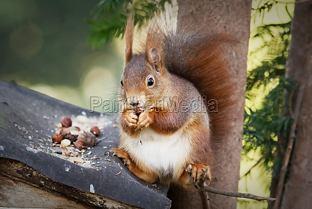 cool squirrel sitting casually on a