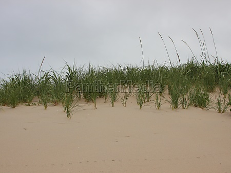 top of sand dune with wild