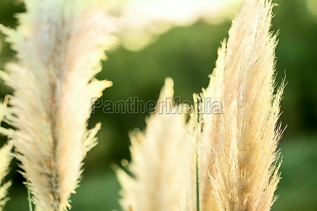 luxx travel reed growing serenity asia