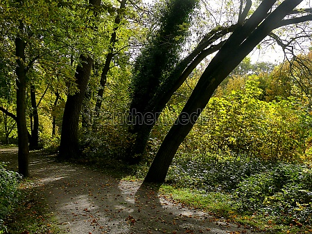 autumn at the riverside of the