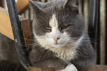 cute cat portrait with closed eyes