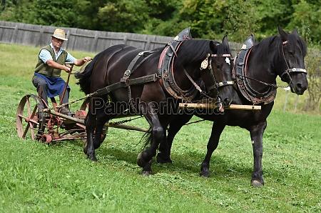 ein, pferdegespann, mit, einem, historischen, pflug - 29766859