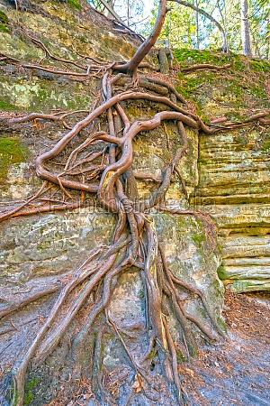 web of tree roots on a