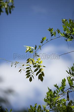 vine of green leaves