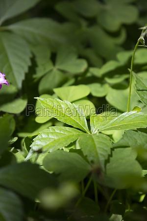 deep green weeds and clover