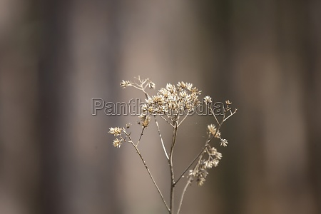 bouquet of dried weeds