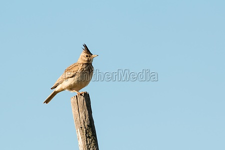 beautiful bird on a stick