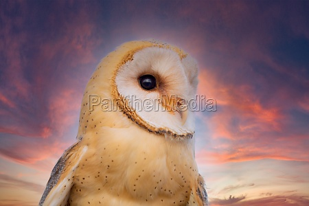 portratit or a beautiful white owl