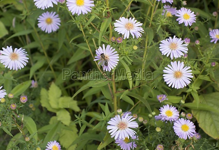 white marguerite flowers on a meadow