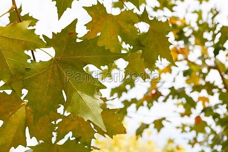 trees full of leaves starting to