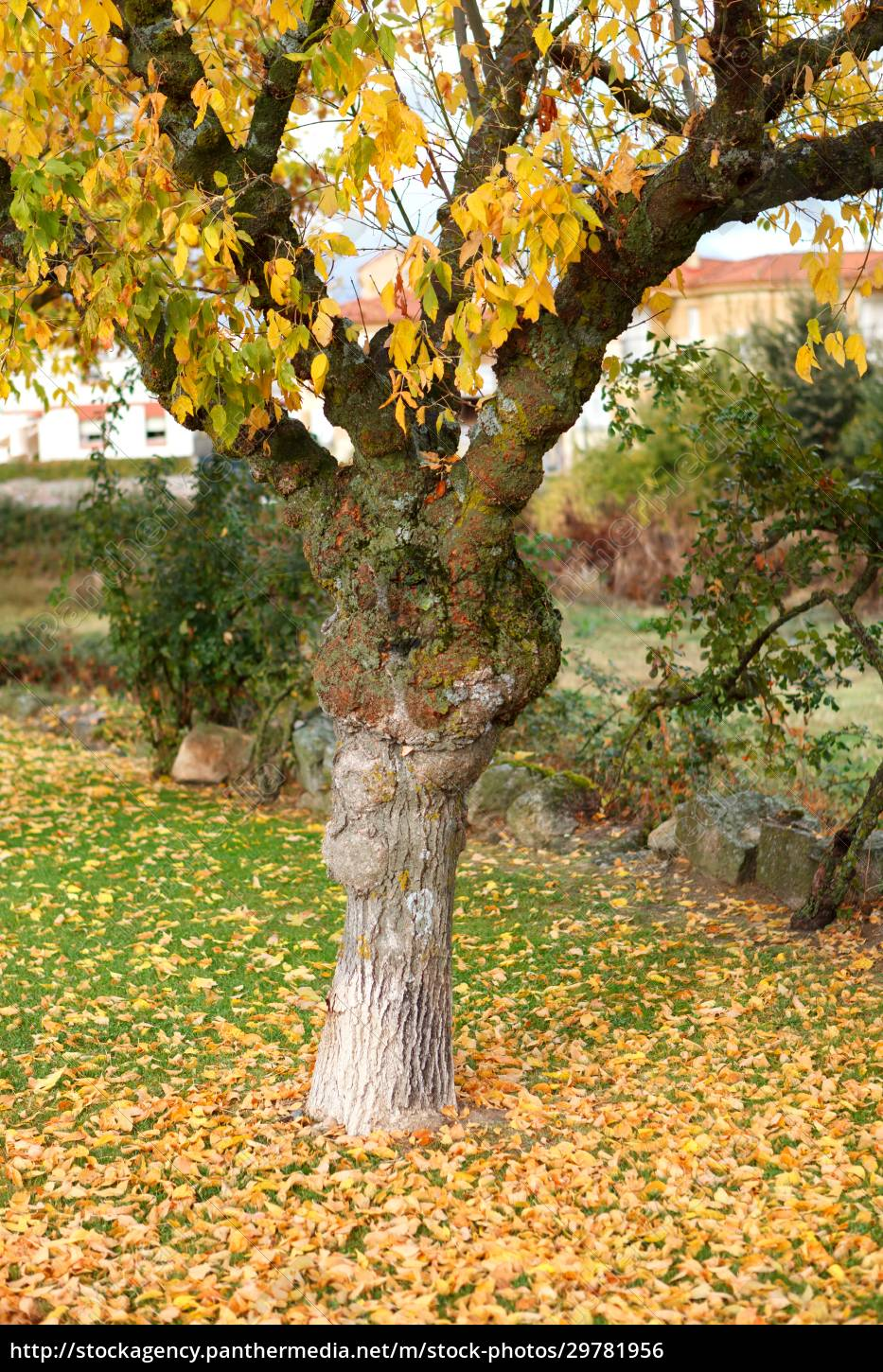 solitary, park, full, of, yellow, leaves - 29781956
