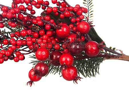 christmas branch with red fruits