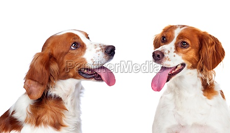 two beautiful dogs