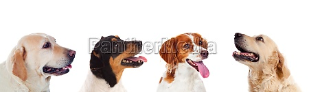 four differents dogs