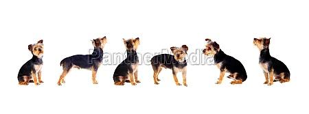six little dogs