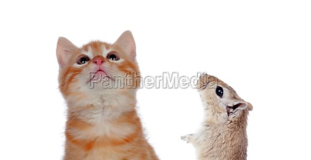 cat and mouse looking up isolated