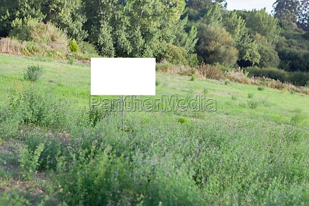 beautiful meadow with a blank cartel