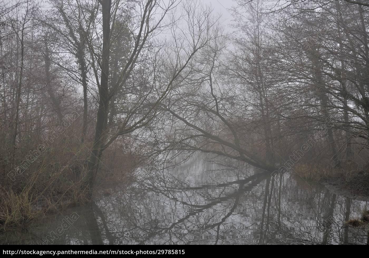 bare, branches, reflection, , adda, river - 29785815