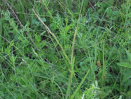 bright green summer grass background