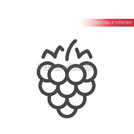 raspberry line vector icon