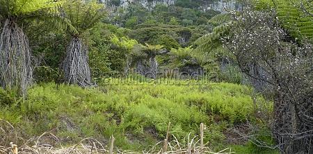 vegetation in new zealand