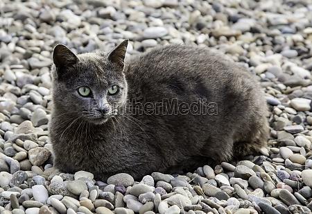 gray cat on the street