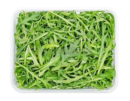 fresh arugula raw rocket salad in