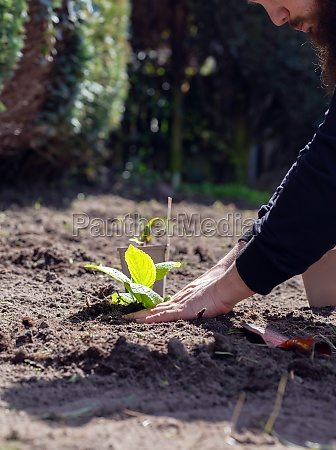 two man hands planting a young