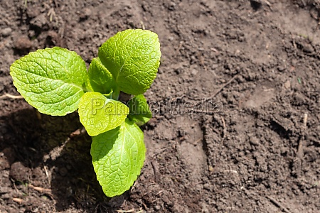 small green new plant in ground