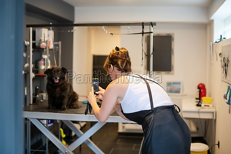 pet hairdresser woman taking pictures of
