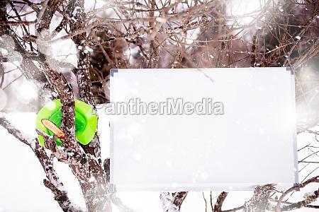 whiteboard on winter tree