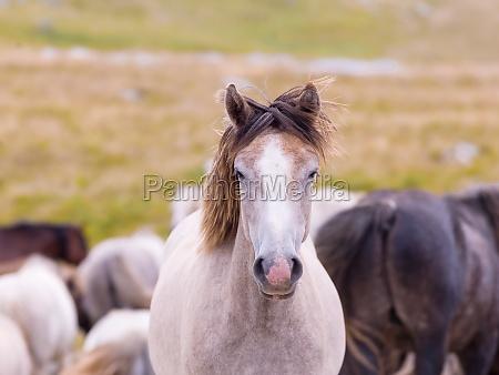 portrait of beautiful wild horses