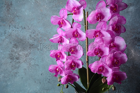 pink orchid branches of