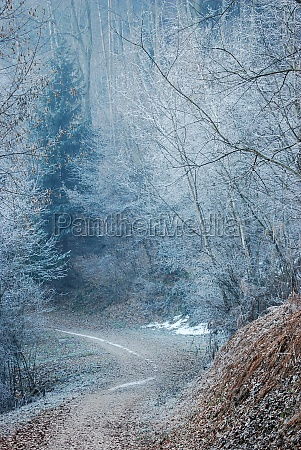 a winter forest