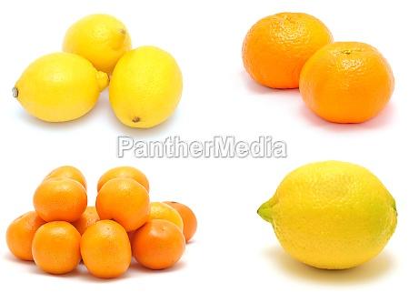 citrus fruit collage