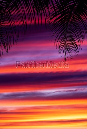 palm trees silhouettes during sunset