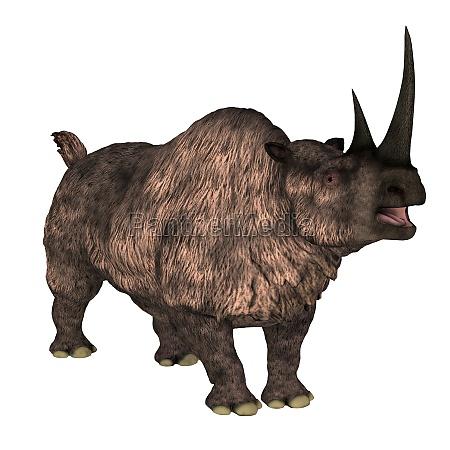 woolly rhino over white