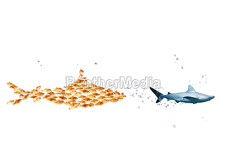 big shark made of goldfishes attack