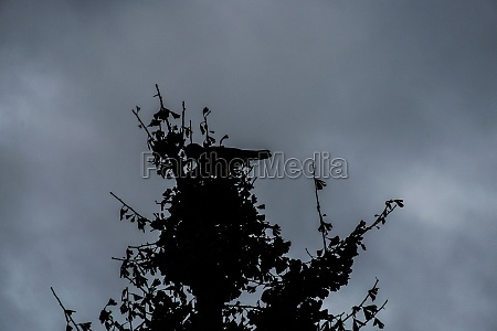 roadside tree and crow silhouette