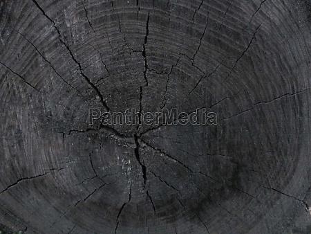 cracked wooden texture sawn stump